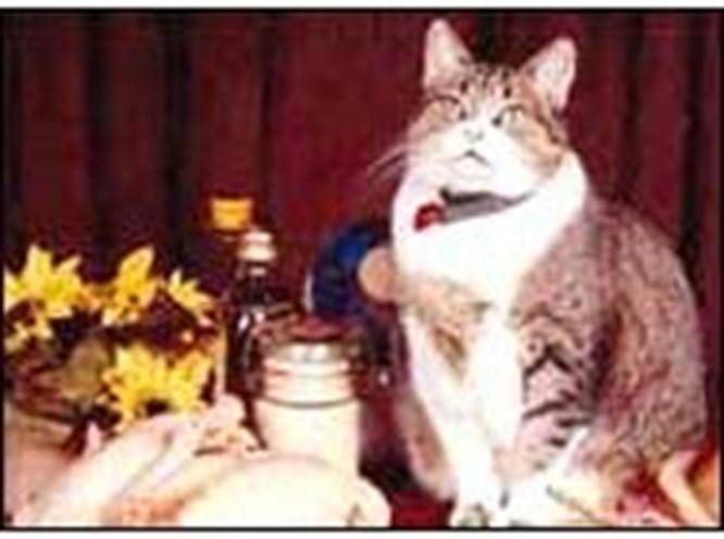 İngilizlerin evcil hayvanları da obez